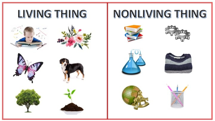 Characteristics of living and nonliving things
