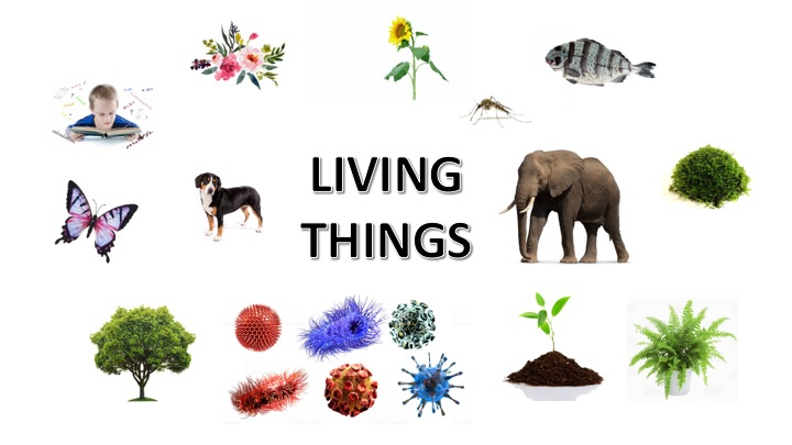 CLASSIFICATION OF LIVING THINGS » Selftution
