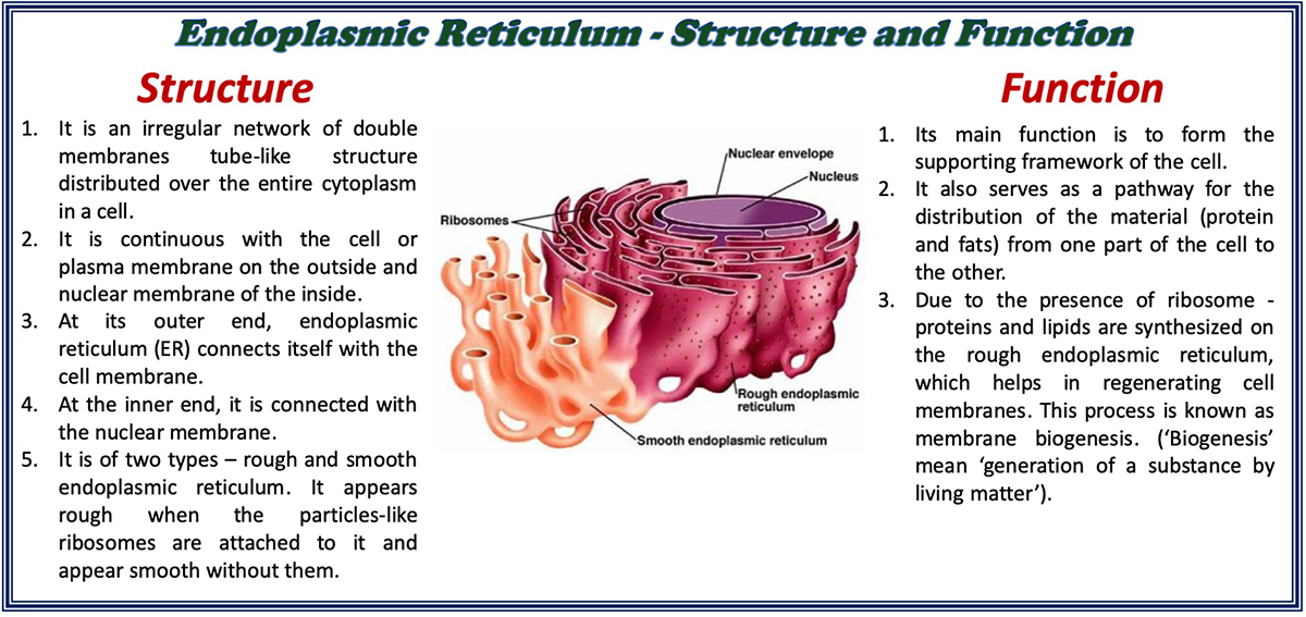 Structure And Function Of A Cell And Its Organelles